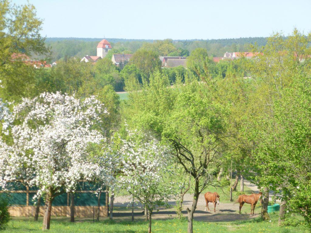 Über die Koppeln hinweg sieht man das Dorf Görzke im Hintergrund.