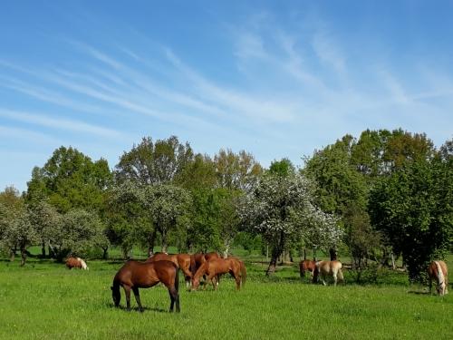 Unsere Pferde auf der Koppel