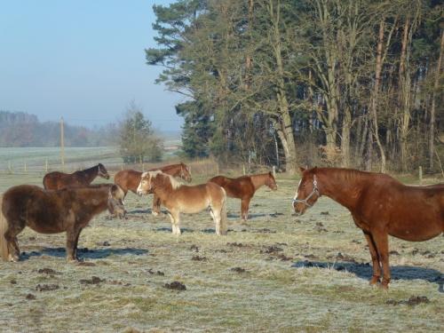 Auch im Winter leben unsere Pferde in Robusthaltung.