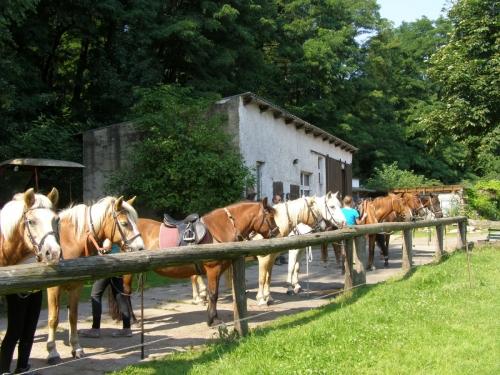 Die Pferde werden für einen Ausritt oder eine Reitstunde vorbereitet.