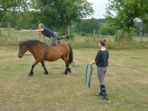 Voltigieren heißt turnen auf dem Pferd.