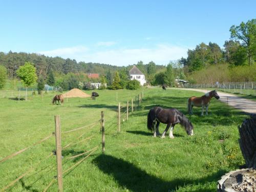 Blick auf den Heidehof von der Einfahrt aus