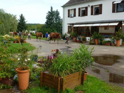 Anlage, Hof, Reitpension Heidehof, Görzke, Hoher Fläming (6)